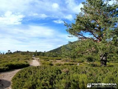 Siete Picos:Senda Herreros,Camino Schmid(Schmidt); senderismo y excursiones;rio jarama mapa